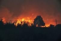 Datça'da Korkutan Yangın