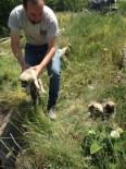 Sulama Kanalına Düşen Yavru Köpekleri Köylüler Kurtardı