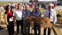 ÇEKİLİŞ - Tekirdağ'da 'Hasat Bayramı' Kutlandı
