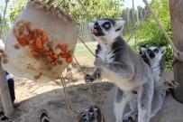 İZMIR DOĞAL YAŞAM PARKı - Vahşi Hayvanlara Dondurma Servisi