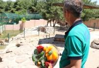 DEVE KUŞU - Yırtıcı Hayvanların Meyveli Ve Etli Dondurma Keyfi