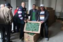 Bayburt'ta Çiftçilere Tohum Ve Fide Desteği