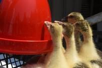 Hayvansal Üretimde Çeşitlilik Artıyor