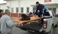 AFYON KOCATEPE ÜNIVERSITESI - Otomobilin Çarpıp Kaçtığı Yaralı Köpeğe Zabıta Sahip Çıktı