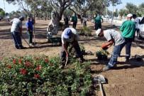 ZEYTINLI - Aliğa'da Zeytinli Park Güllerle Donatıldı