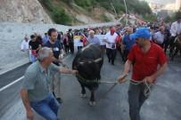 Kafkasör Festivali Boğalar Eşliğinde Yürüyüşle Başladı