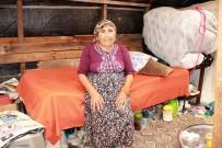 60 Yaşındaki Kadın Tahta Barakada Yaşam Savaşı Veriyor