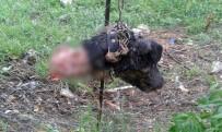 MUSTAFA YıLMAZ - Bilecik'te esrarengiz köpek ölümleri