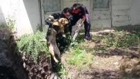 YARıMCA - İnşaatın Temeline Düşen Köpeklere İtfaiye Müdahale Etti