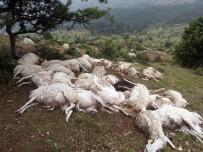 Yıldırım Düştü, 73 Koyun Telef Oldu