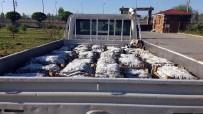 İNCİ KEFALİ - Ahlat'ta Kaçak Avlanmış İnci Kefali Ele Geçirildi