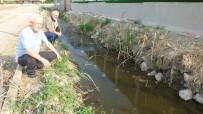 HAYVAN SEVERLER - Burhaniye'de Su Kaplumbağaları Yaşam Mücadelesi Veriyor