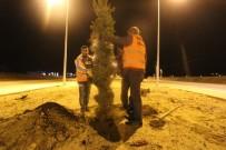 İftar Sonrası Ağaç Dikimi