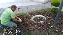 TAFLAN - Kocaeli Sahilleri Çiçeklerle Süsleniyor