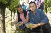 AHMET BAYER - Manisalı Çiftçiyi Dolu Vurdu