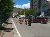 Solhan'da Başı Boş Hayvanlarla Mücadele