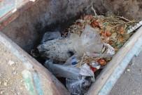 ÇÖP KONTEYNERİ - Çöpte Kesilmiş At Kafası Bulundu