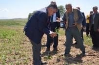 TARIM SİGORTASI - Ereğli'de Dolu Yağışının Ardından Arazide İncelemeler Sürüyor