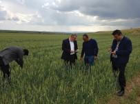 BEŞPıNAR - Sungurlu'da Tarım Arazilerini Dolu Vurdu