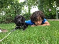 Yalova'da Köpek Katliamı