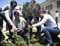 ORHAN SARIBAL - CHP'liler Meclis bahçesine zeytin fidanı dikti