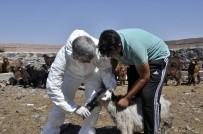 SAĞLIK TARAMASI - Diyarbakır'da 520 Bin Hayvan Kayıt Altına Alındı