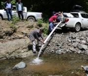 AKÇAOVA - Ordu'nun Derelerine Balık Dayanmıyor