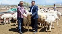 Aksaray'da Küçükbaş Hayvancılık Teşvikle Büyüyor