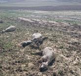 MURAT CEYLAN - - Ankara'da Şiddetli Yağmur,  Çobanlar Canını Zor Kurtardı