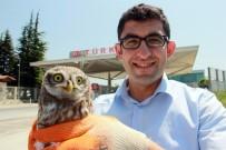MEHMET ÖZDEMIR - Türk Gümrükçüden Örnek Hayvan Sevgisi