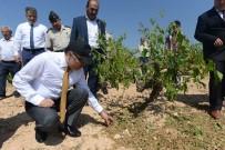 AHMET ALTIPARMAK - Vali Altıparmak, Dolunun Vurduğu Tarım Arazilerini İnceledi