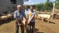 CEYLANPINAR - Kırıkhan Ve Hassa'da Damızlık Koç Dağıtımı Yapıldı
