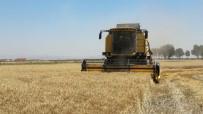 MEHMET KıLıNÇ - MKÜ Arazilerinde Buğday Hasadına Başlandı