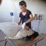 YÖRÜKLER - Yaralı Halde Bulunan Leylek Ve Köpek Tedavi Altına Alındı