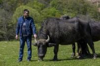AĞAÇLı - Pirinççi Köyü İtalyanlar'ın İlgi Odağı Oldu