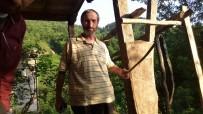 Rize'de Yaklaşık İki Metre Uzunluğundaki Yılan Ölü Bulundu