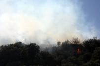 GÖKTEPE - Bodrum'daki yangın söndürüldü