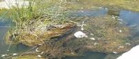 TUĞLU - Küfi Çayı'nda Toplu Balık Ölümleri