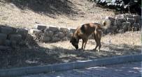 KAĞITHANE BELEDİYESİ - Kağıthane'de Sıcaktan Bunalan Sokak Hayvanları Perişan Durumda