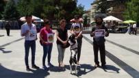 BAKIM MERKEZİ - Tokat'ta, Hayvan Hakları Savunucularından Yasa Tasarısı Tepkisi
