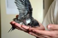 İLKAY - Bitkin Haldeki Ebabil Kuşuna 112 Ekipleri Sahip Çıktı