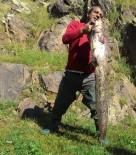 OLTA - Kars Çayı'da Boyu Kadar Balık Tuttu