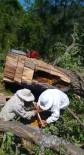 Kesilen Ağaçtan 30 Kilo Bal Çıktı