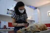 EVCİL HAYVAN - Evcil Hayvan Sahipleri Dikkat
