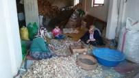 GÖZLEME - Hisarcık'ta Haşhaş Kapsülü Hasadına Başlandı