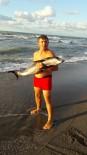 YUNUS BALIĞI - Kıyıya Vuran Yunus Balığı Tekrar Denize Salındı