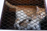 KONYAALTI BELEDİYESİ - Konyaaltı'nda Sokak Hayvanları İçin Vantilatör