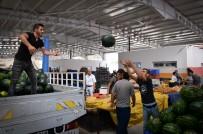 SEMT PAZARI - Sedir Semt Pazarı Açılıyor