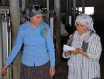 Süt kooperatifinde yönetimi kadınlar devraldı