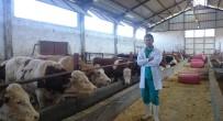 SÜT ÜRETİMİ - Veteriner Hekim Saydan'ın Milli Hayvancılıkla İlgili Araştırması